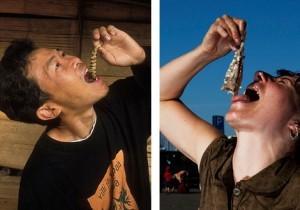 Wat is het verschil tussen haring of insect happen?