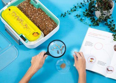 Meelwormen kweken met de Hive Explorer