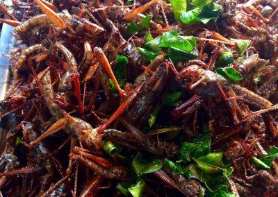 Het nieuwe eten – insecten als eiwitbron